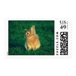 Little rabbit postage stamp