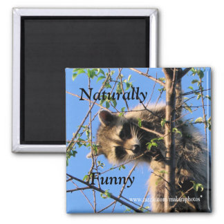 Little Raccoon Magnet-customize 2 Inch Square Magnet