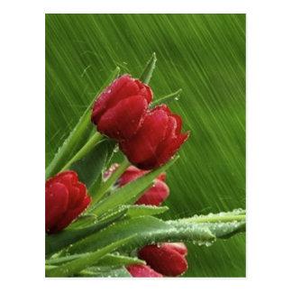 Little_Rain_jpeg Postcard