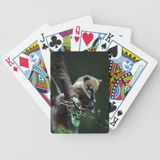 Little rascals coati - lemur bicycle playing cards