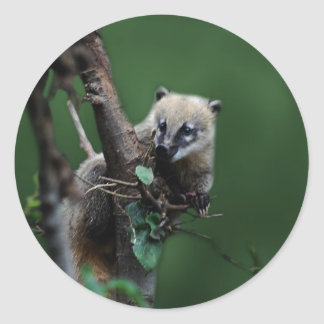 Little rascals coati - lemur classic round sticker