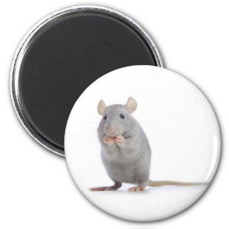 little rat 2 inch round magnet