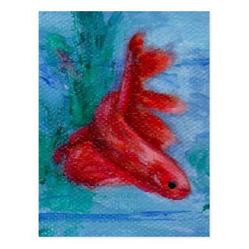 Little Red Betta Fish Postcard