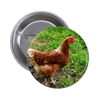 Little Red Chicken  - Free Range Egg Layer Buttons