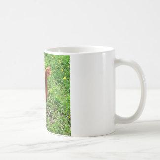 Little Red Chicken  - Free Range Egg Layer Coffee Mug