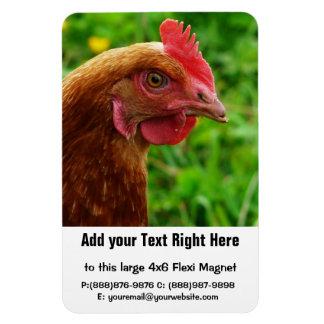 Little Red Laying Hen - RIR or ISA Brown Chicken Rectangular Photo Magnet