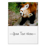 Little Red Panda With Fern - Animal Photography Cards