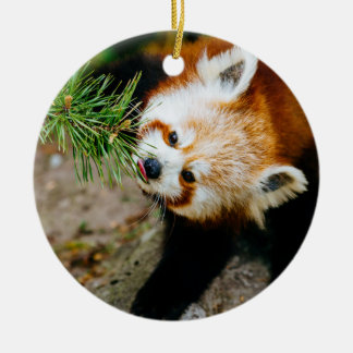 Little Red Panda With Fern - Animal Photography Ceramic Ornament