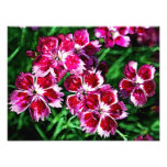 Little Red Pink and White Flowers Photographic Print