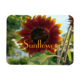 Little Red Sunflower Magnet