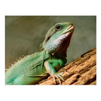Little Reptile Postcard