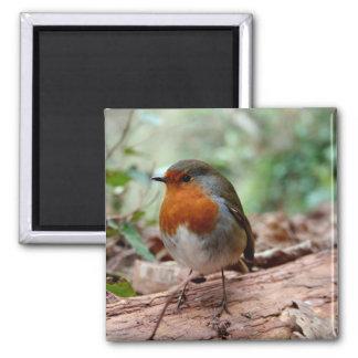 Little Robin Magnet