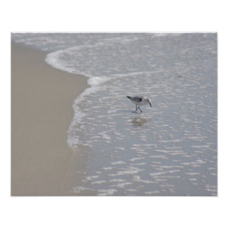 Little Sand Piper Poster