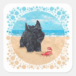 Little Scottie Finds a Crab at the Beach Square Sticker