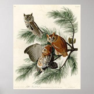Little Screech Owl Birds of America Poster