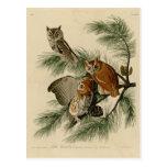 Little Screech Owl Postcards