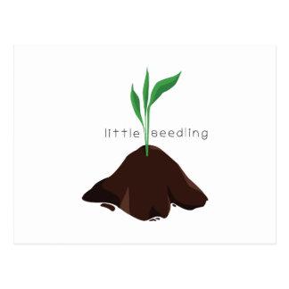 Little Seedling Postcard