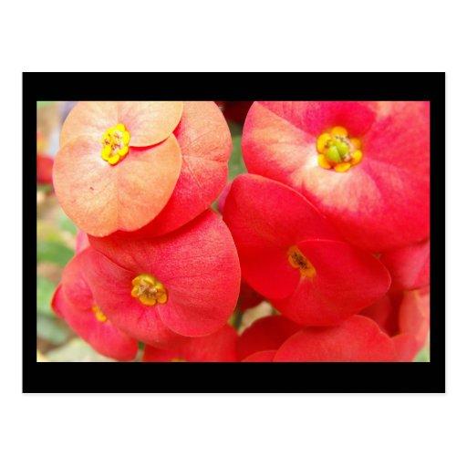 Little Seeds Post Card 2