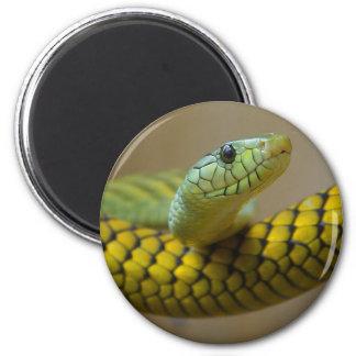 Little Snaked Magnet