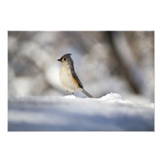 Little Snow Bird Photographic Print