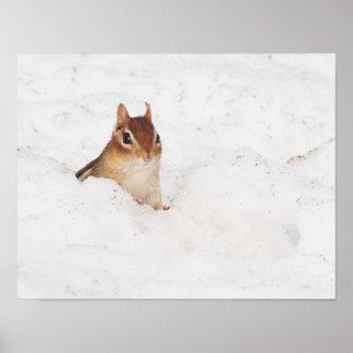Little Snowbound Chipmunk Poster