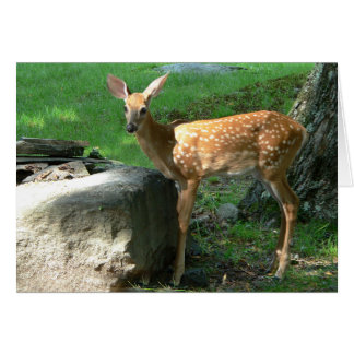 Little Spotted Fawn Greeting Cards