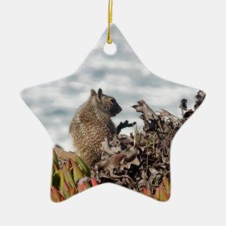 Black Squirrel Ornaments  Keepsake Ornaments  Zazzle