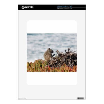 Beach Themed Little squirrel decal for the iPad