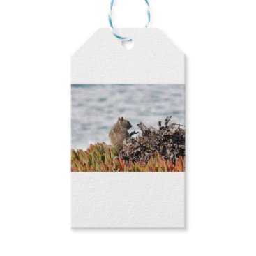 Beach Themed Little squirrel gift tags
