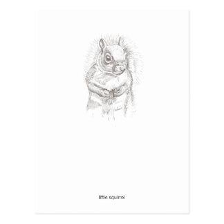 Little Squirrel Postcard