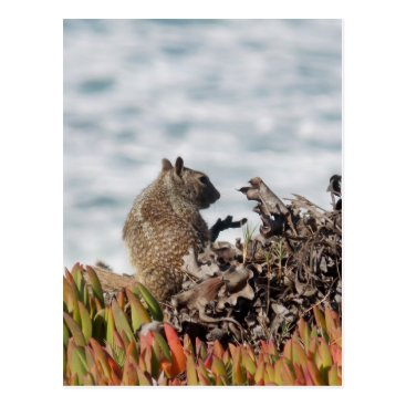 Beach Themed Little squirrel postcard