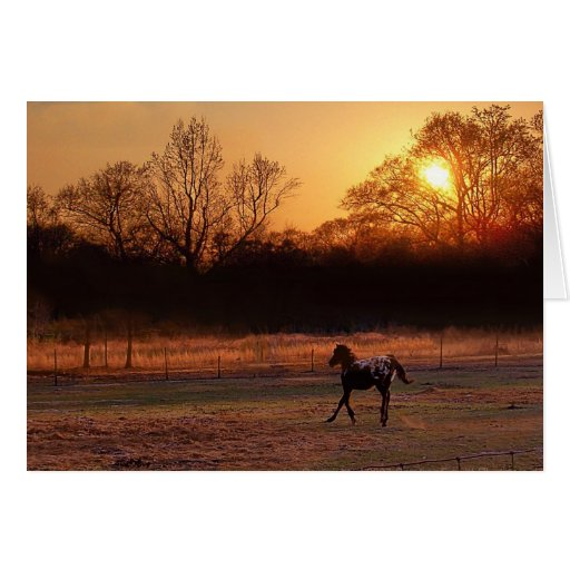 Little Stallion At Sunset Greeting Cards