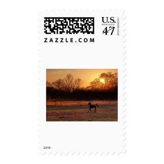 Little Stallion At Sunset Postage