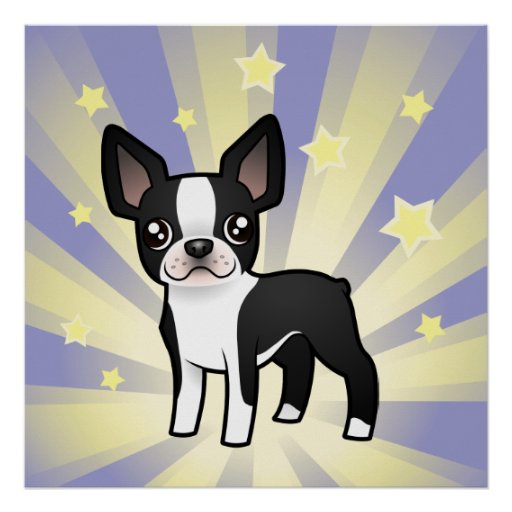 Little Star Boston Terrier Poster