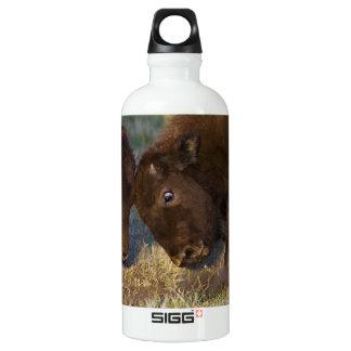 Little Teacher SIGG Traveler 0.6L Water Bottle