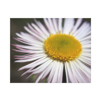 Little Things Flower Canvas Print