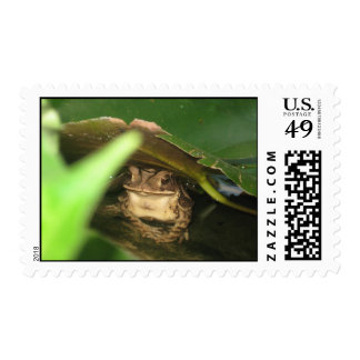 Little Toad Postage Stamps
