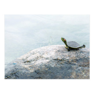 Little Turtle and Damselfly Postcard