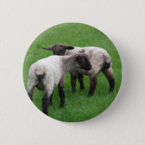 Little Twin Lambs Pinback Button