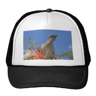 Little Wattlebird Trucker Hat