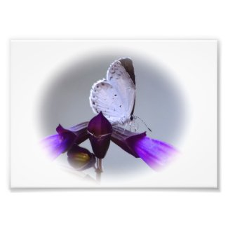 Little White Butterfly Photo Print