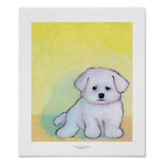 Little white dog art drawing cute Maltese puppy Posters
