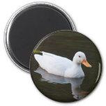 Little White Duck Magnets