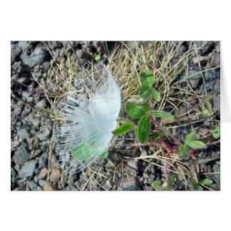 Little White Feather 1 Greeting Card