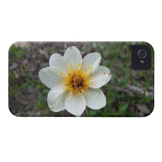 Little White Flower; No Text Case-Mate iPhone 4 Case