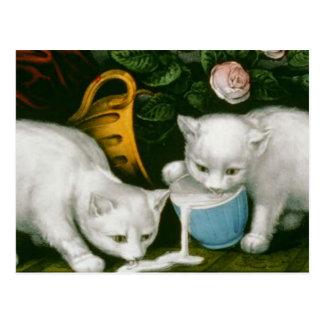 little white kitties getting into mischief milk postcard