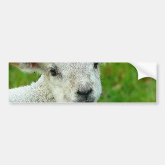 Little White Lamb Bumper Sticker