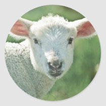 Little White Lamb Classic Round Sticker
