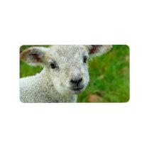 Little White Lamb Label