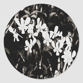 Little White Orchids Classic Round Sticker